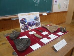 ナウマンゾウ化石レプリカ展示