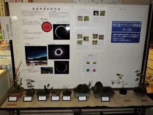 信濃町星空研究会と信濃町コケの会の展示