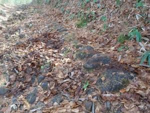 直線に並んだ石