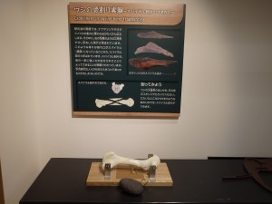 【New】体験ミュージアム 骨割り実験