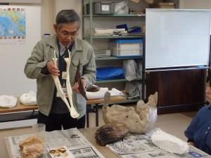 近藤館長によるオオツノジカ下顎骨の説明