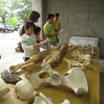 7月29日(土)野尻湖花火大会イベント 「ゾウの骨にさわってみよう」