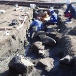 2017年春の野尻湖地質調査のお知らせ