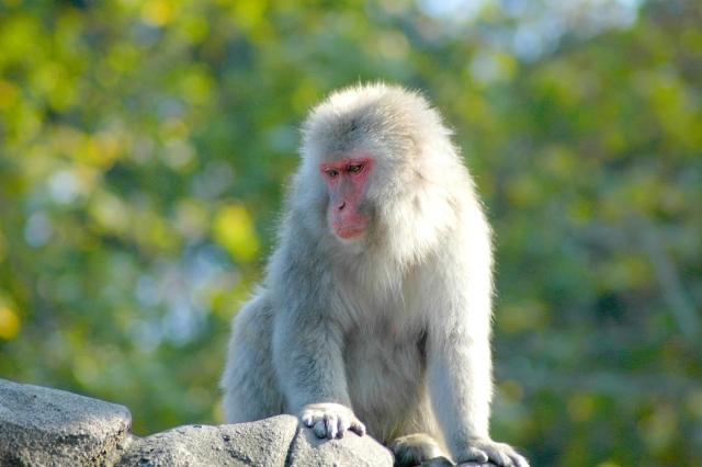 動物園で学ぶ進化